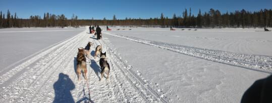 Husky Safari – een coachreis naar Finland